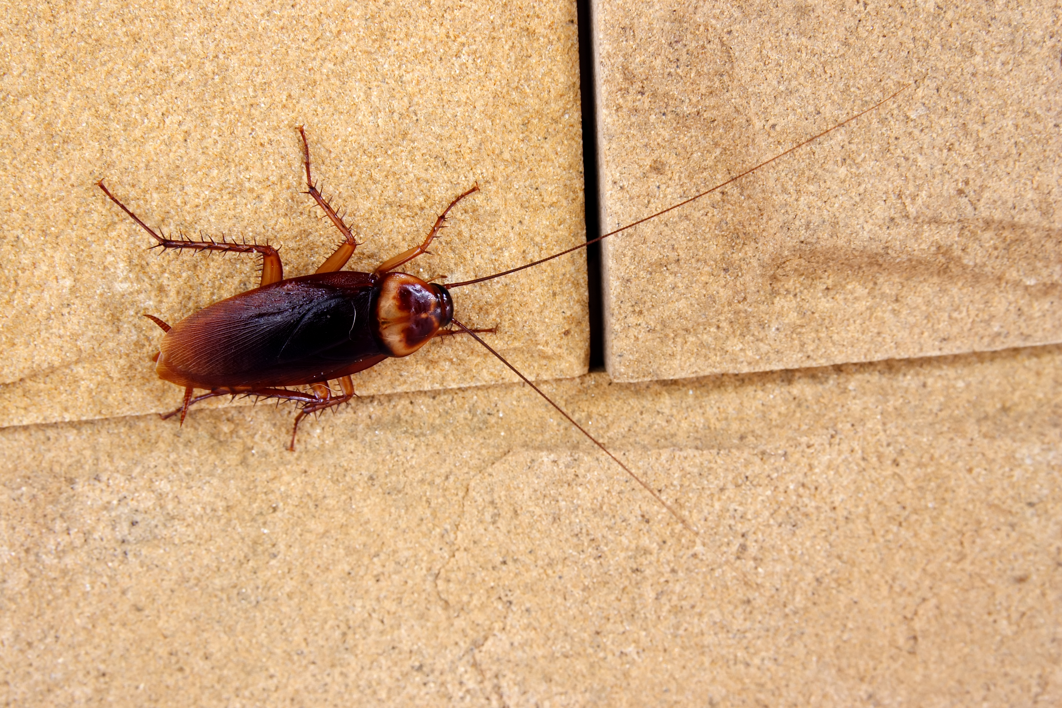 cockroach crawling next to crack